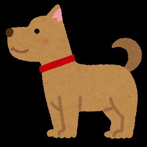 反抗期対策として【犬を飼う】、猫を飼うことの効果は?心の安らぎと責任感の確認