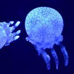 海水浴のクラゲ情報と対策方法!2020年最新版!